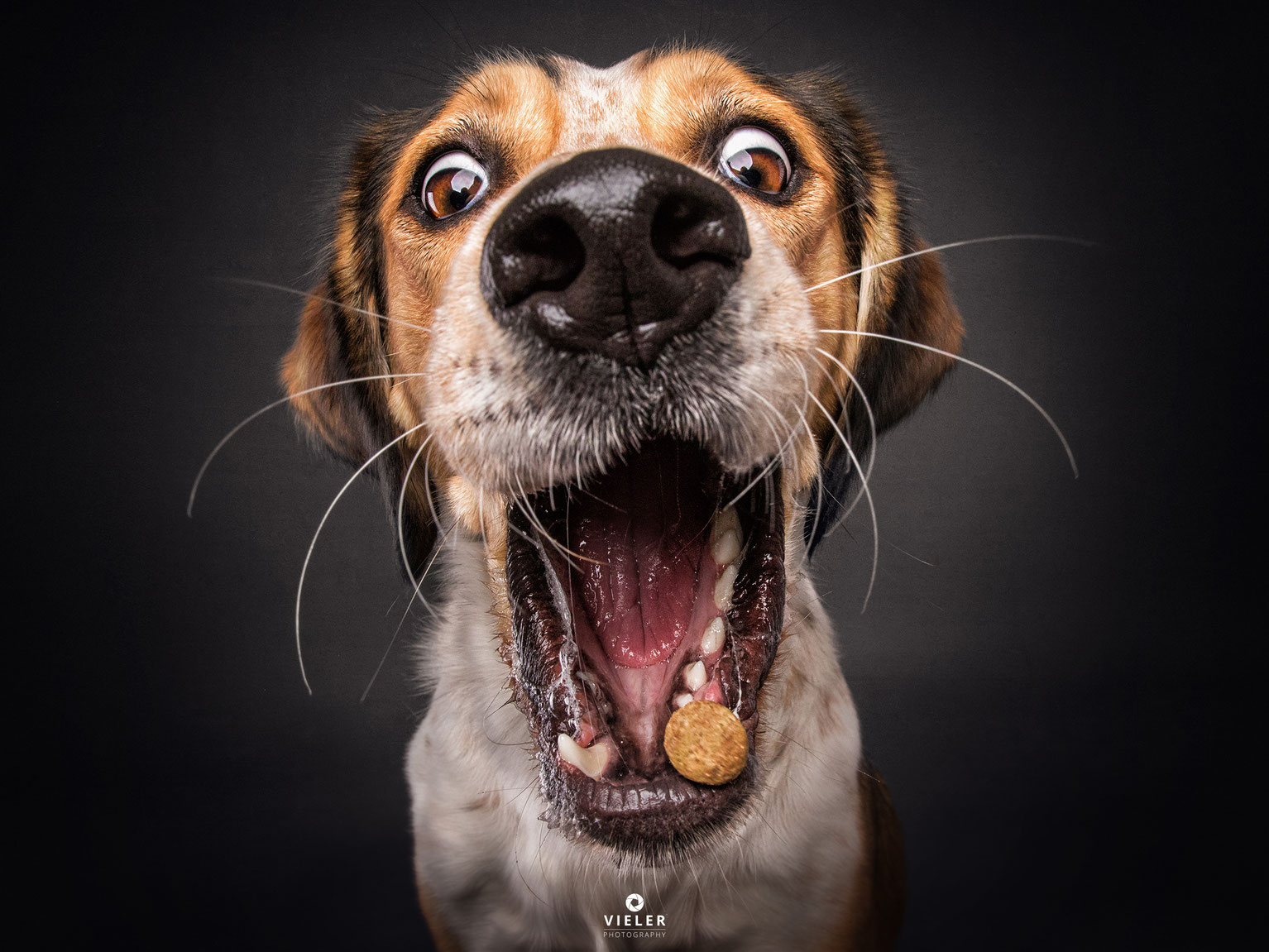 Download These Adorable Christian Vieler Dog Wallpapers For Your Iphone Applemagazine
