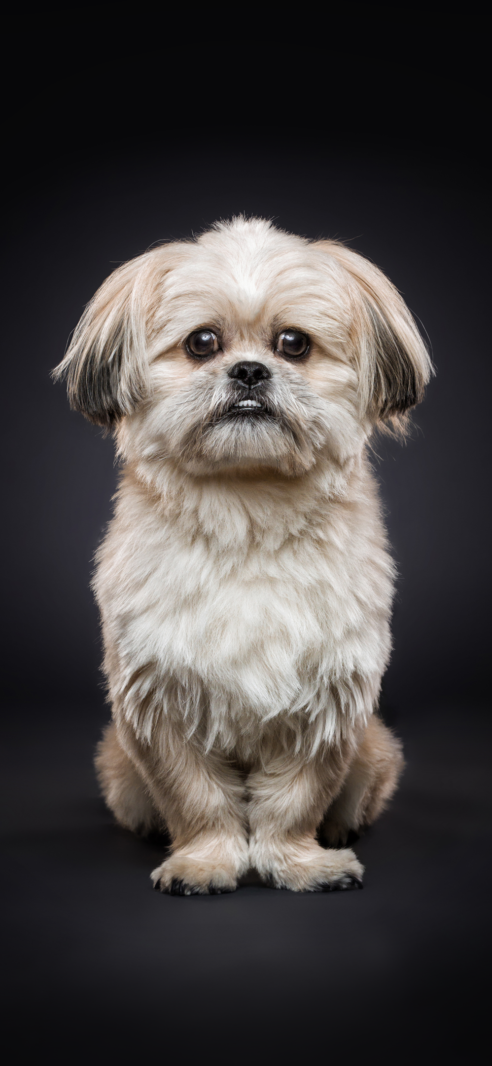 Download These Adorable Christian Vieler Dog Wallpapers For